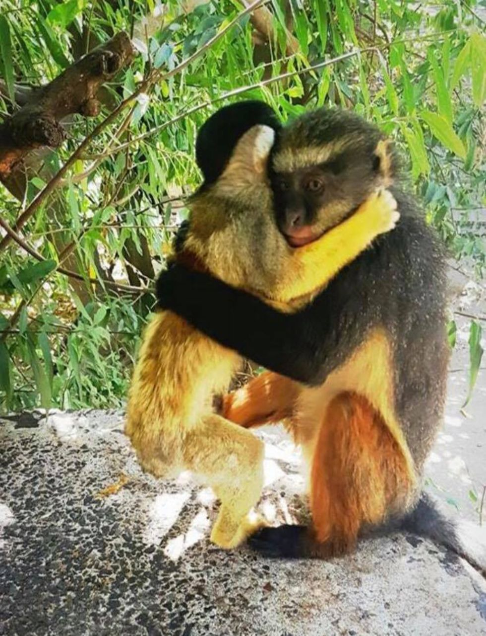 bolivian squirrel and wolf monkey hugging